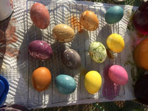 Dye Easter Eggs - Drying Eggs